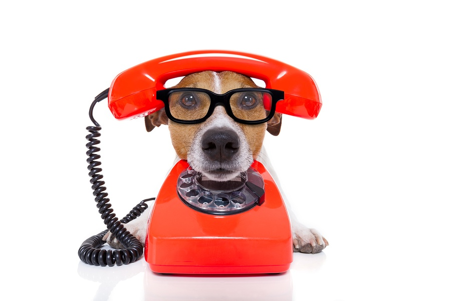 bigstock-Dog-On-The-Phone-86058353