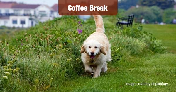 Pet friendly housing image