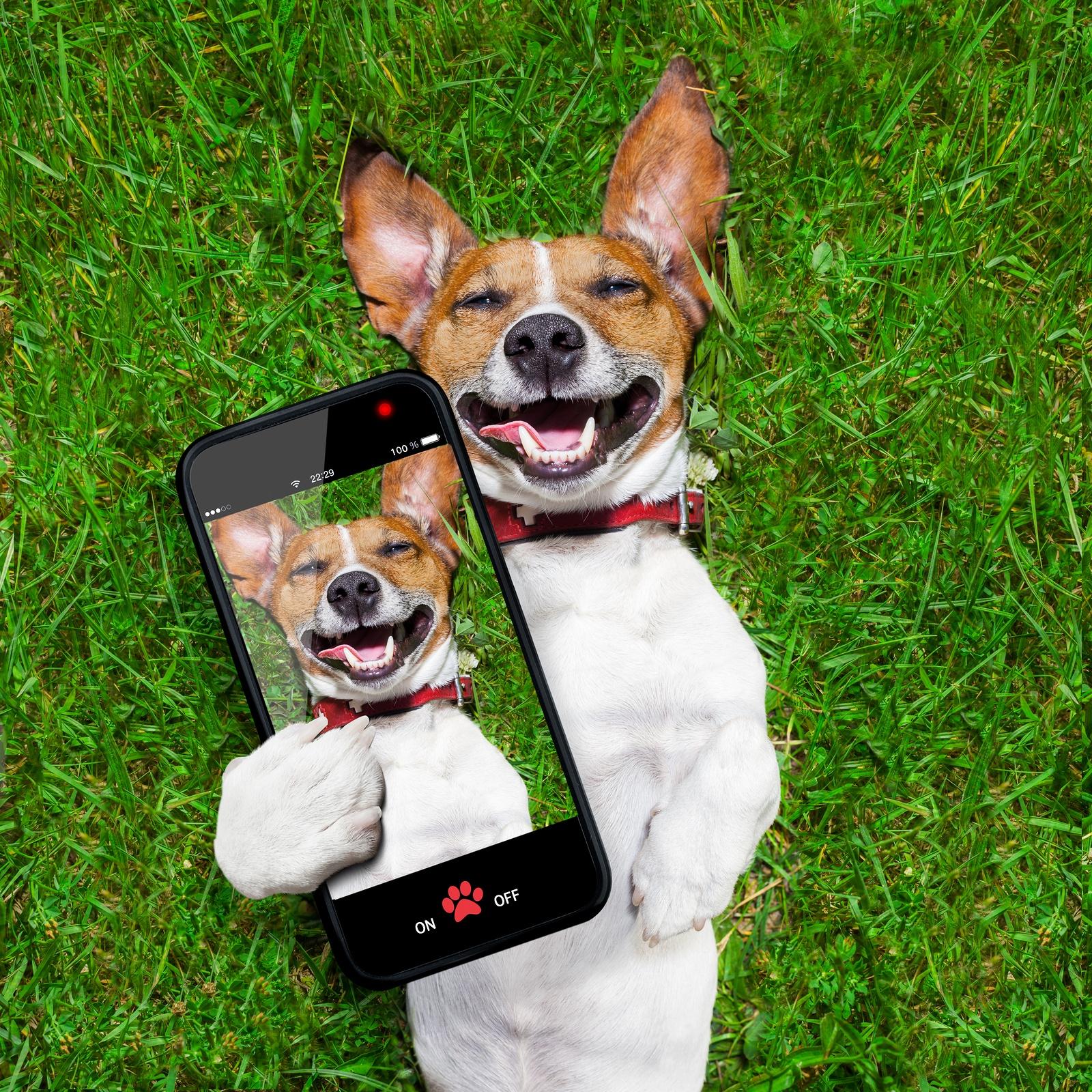 bigstock-Very-Funny-Dog-66766075.jpg